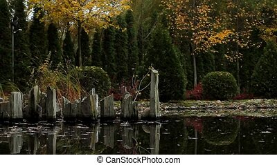 Country pond. - Beautiful autumn landscape. Country pond.