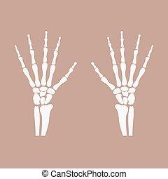wrist hands bones - human wrist hands bones icon - vector...