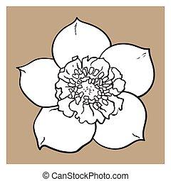 Hellebore, Christmas rose single flower, top view, sketch...