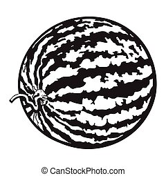 Perfect whole striped watermelon with curled up tail, sketch...