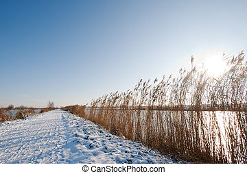 Snow covered path with the sun shining through the reeds