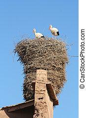 Big storcks nest - Storks nest in in moroccan %u0441asbah