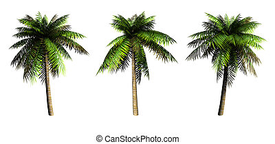 Palms. - Palms on a white background. 3D art-illustration.