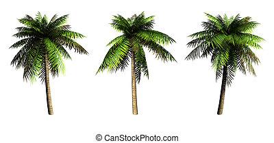 Palms. - Palms on a white background. 3D art-illustration.
