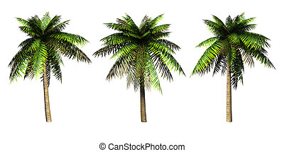 Palms - Palms on a white background 3D art-illustration
