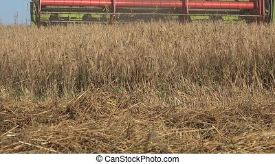 Grain thresher combine machine harvesting wheat rye barley...