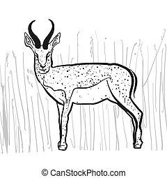 Antelope Springbok, Hand-drawn Vector Clipart