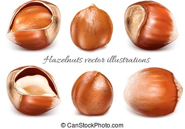Collection of vector illustrations hazelnuts