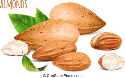 Almonds whole and almond kernels. Vector illustration