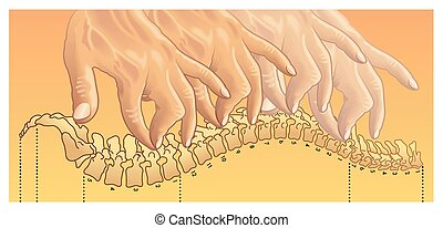chiropractic - Medical symbolic illustration of a session of...