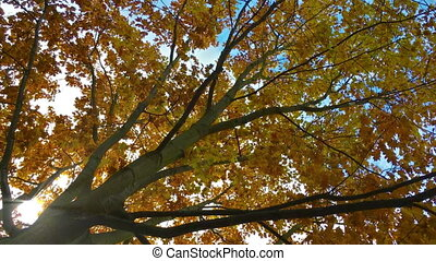 Autumn Tree with moving leaves