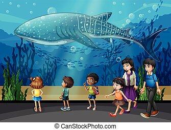 Killer whale in the aquarium illustration