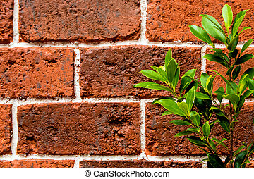 Ornamental plant on the red brick wall