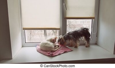 cat and a funny dog Yorkshire Terrier sitting on the sill of...