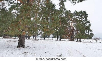 trees forest christmas tree, nature snow frost cold the...