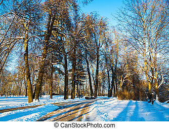 Loshitsa park, Minsk Belarus - landscape trees covered with...