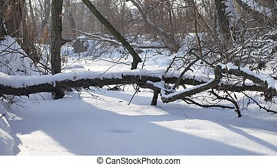 forest frozen nature stream in the snow tops of trees landscape