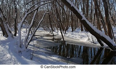 forest stream flows landscape in the winter forest nature snow