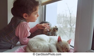 girl teen and pets cat and dog looking pet out the window,...