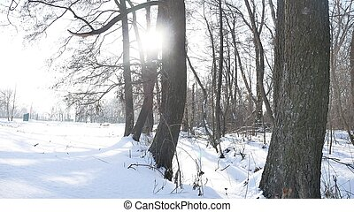 trees nature winter dry forest snow, landscape frozen the...