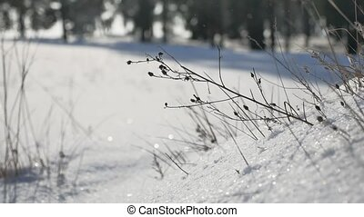 dry grass in winter snow forest landscape the nature