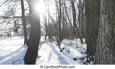 trees winter forest nature snow, landscape frozen river -...