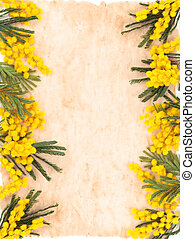 Border of mimosa flowers. - Frame of mimosa flower and old...