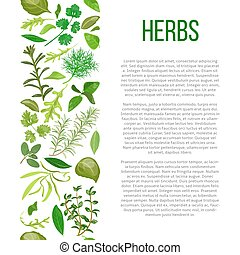 different herbs with description text - Popular culinary...