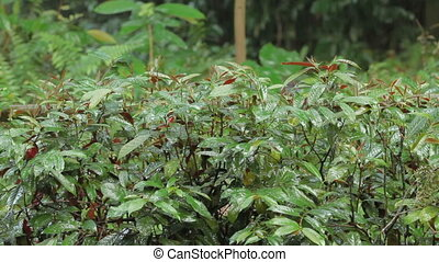 Bright green plants under the rain. Tropical forest in rainy...