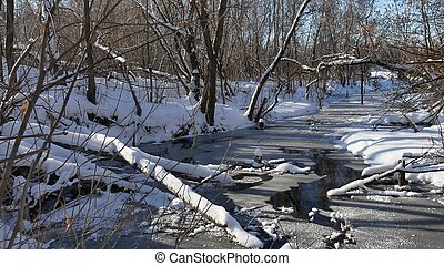 forest stream flows in the winter forest nature snow,...