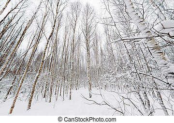 Winter forest. Snowy wood captured with Fish-Eye lens. Path...