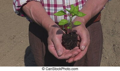 Young plant in farmer hands, seedling ecology growth symbol