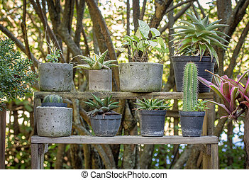 potted plant in the garden outdoor