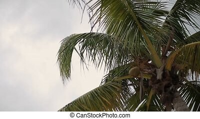 Coconut palm trees near beach