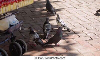 Pigeons on city street at sunny day