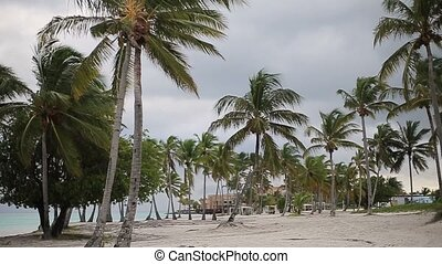 Caribbean beach nature at cloudy day