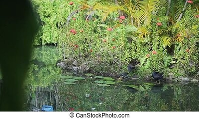 Black birds near pond shot