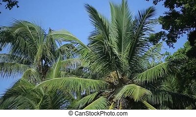 Tropical palm trees at sunny day