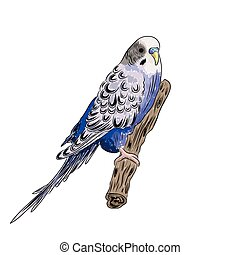 vector vivid realistic parrot sitting on tree branch. EPS