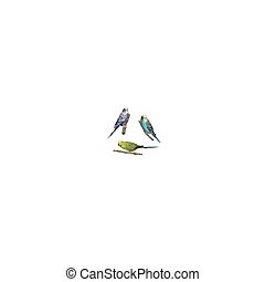 vector vivid realistic parrots sitting on tree branch. EPS