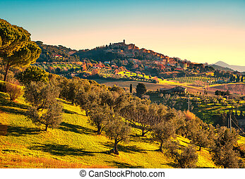 Casale Marittimo village and olive trees in Maremma....