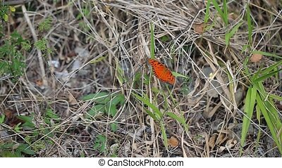 Orange butterfly in garden at sunny day