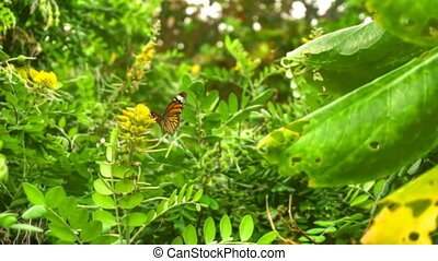 Monarch butterfly flight - Monarch butterfly -Danaus...