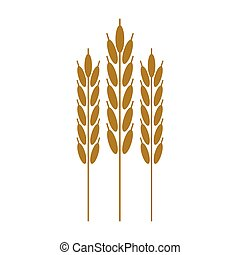 harvesting wheat ears cereal