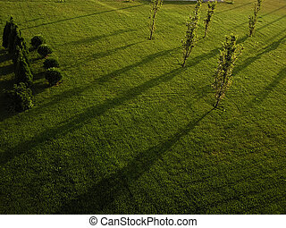 Sumer Morning - Lawn with young trees and diagonal shadows...