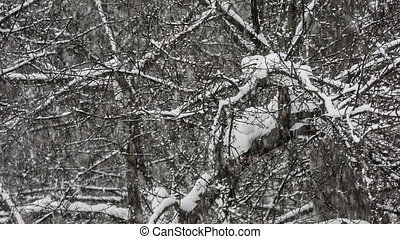 Snowfall - Snow falling on the background of trees