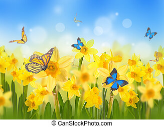 Yellow daffodils with butterflies, spring background of...
