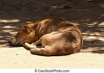 sleeping feral dog - photo of an Indian feral dog asleep in...
