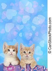 Two kitten in front of heart background - Two kitten in...