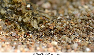 pebble with an ant path close up